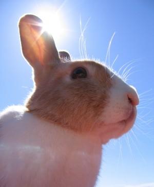 kaninchen_himmel