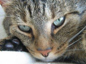 Katze blickt